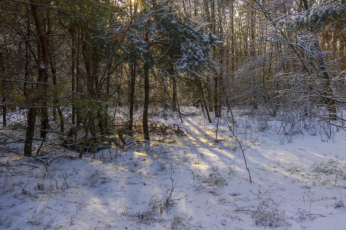 Утро в лесу, с.Могилёв
