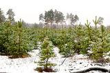 В лесу с. Могилёв