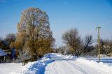 Зимняя липа, с.Могилёв