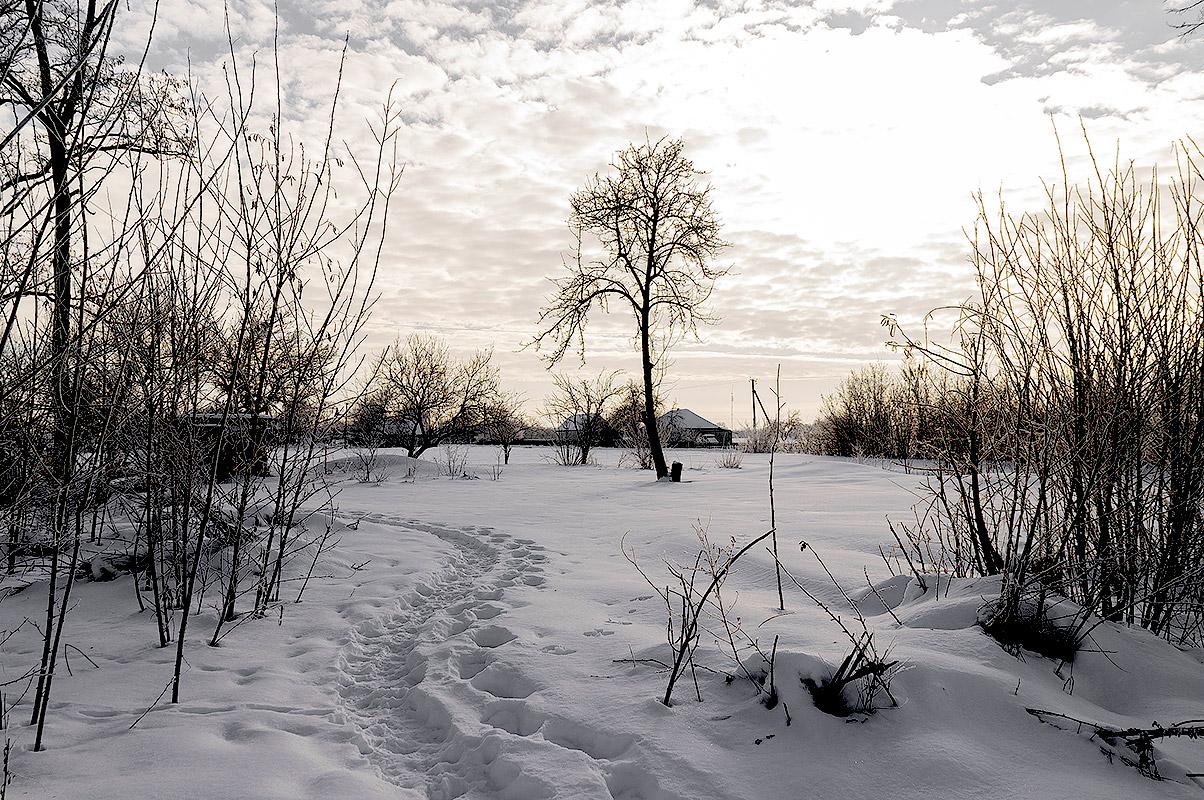 Одинокое дерево, с.Могилёв