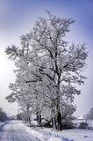 Морозный день, с. Могилёв