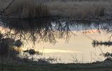 Отражение на закате, Могилёв.
