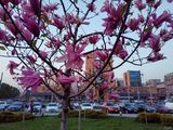 Весна на Солнечном