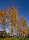 Осень на набережной.