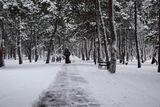Парк им. Писаржевського