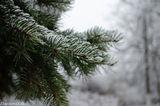 Снег в Днепре