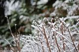 Зимняя красота - неподражаема!