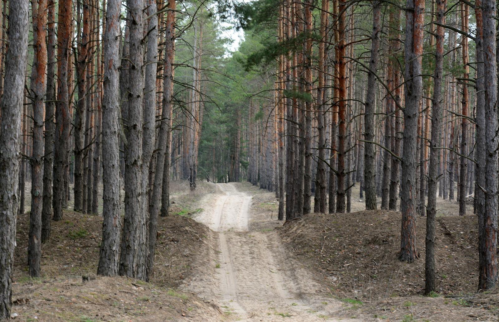 Обуховский лес...