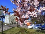 В городе Весна!