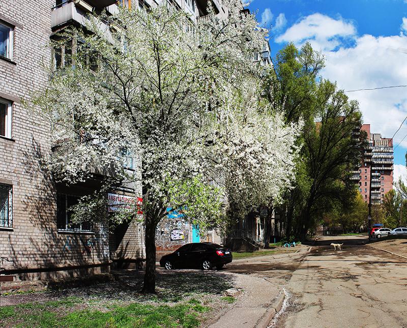 14 апреля. На память о прекрасном дереве