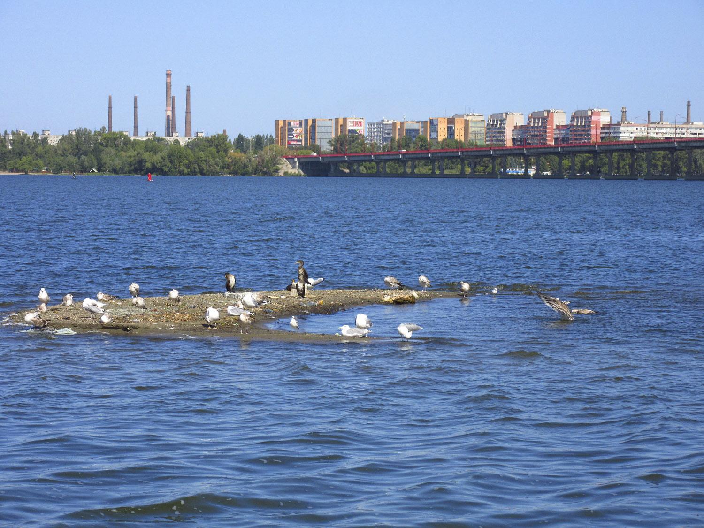 Снова птицы в стаи собираются, ждет их за моря дорога дальняя...