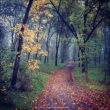 Осенний лесопарк Дружбы Народов