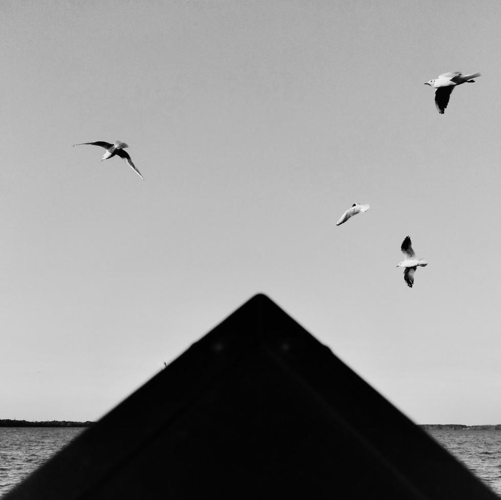 Птички над Днепром