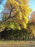 Павлоград, Первомайский парк