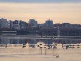 Птицы и город. Оттепель.