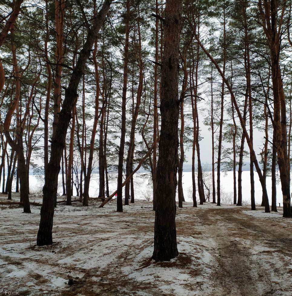 Приднепровский лесок (ныне Любимовское лесничество)