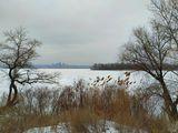 Приднепровский лесок (ныне Любимовское лесничество). Вид на о.Алексеевский и Победу