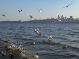 Про Днепр, птиц и ветер