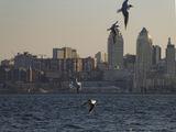 Птицы и город