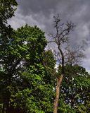 Грозовые облака в начале мая, парк Шевченко