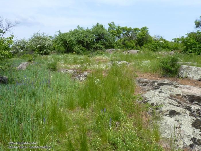 Загадки острова Кодацкий