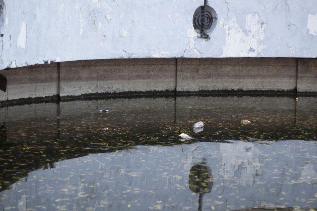 Лебедь без документов и чистка озера за 50 миллионов: что ждет парк Глобы в будущем