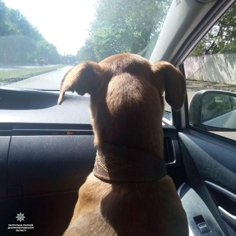 Патрульные Днепра разыскивают владельца собаки