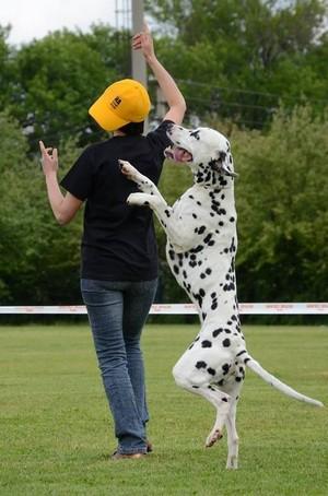 Квалификационные соревнования по танцам с собаками