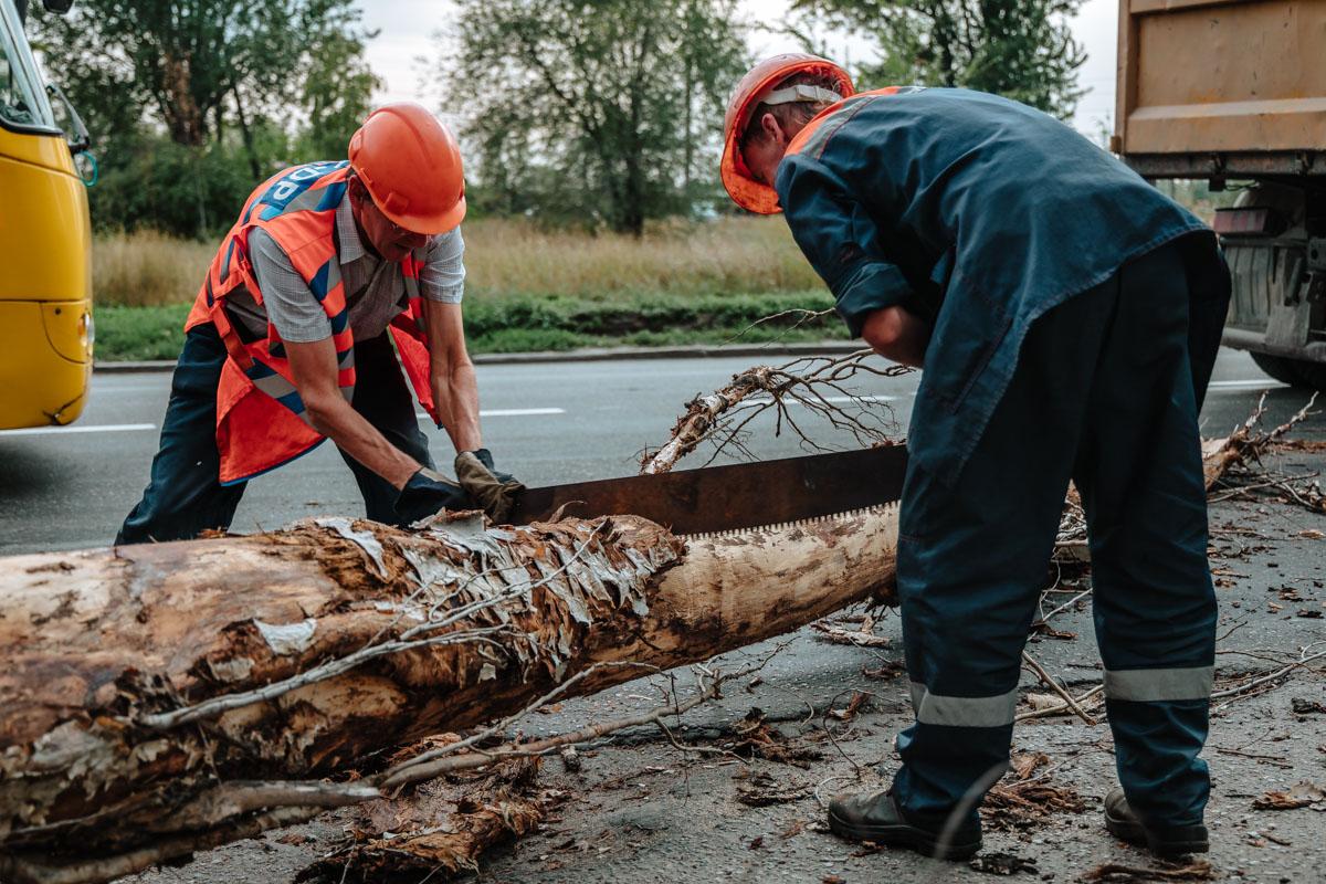 В Днепре на Мануйловском проспекте дерево рухнуло на дорогу, задев провода