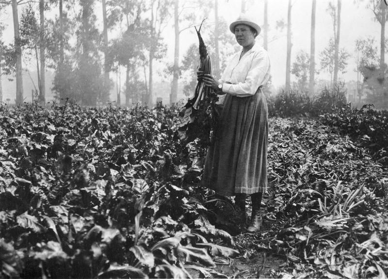 Кэтрин Эзау среди растений. Кэтрин Эзау: Родилась в Екатеринославе, умерла в… Санта-Барбаре