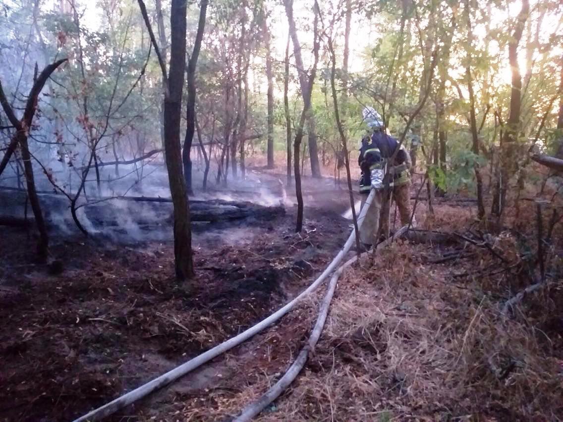 На Днепропетровщине ликвидировали пожар в лесу