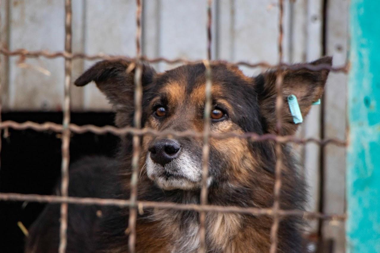 картинки с бездомными животными для сайта было избежать