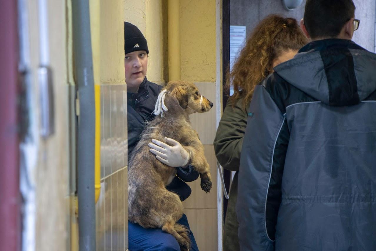 Бездомных собак, которых вывезли в Харьков, вернули в Днепр