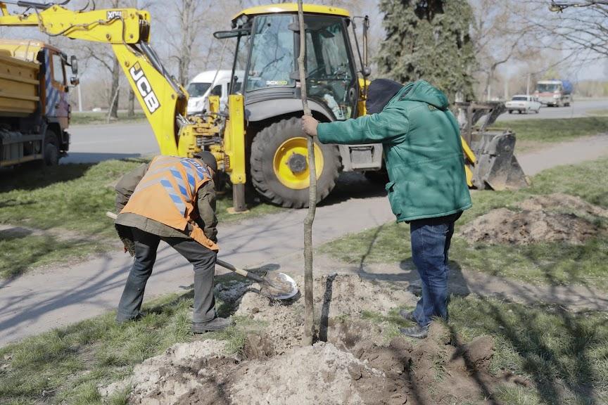 В Днепре продолжают весенние высадки деревьев