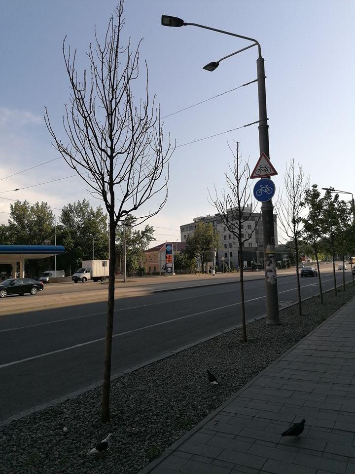Пятая часть саженцев на Курчатова уже погибла.  Молодые саженцы на Набережной Победы в Днепре обречены на усыхание?