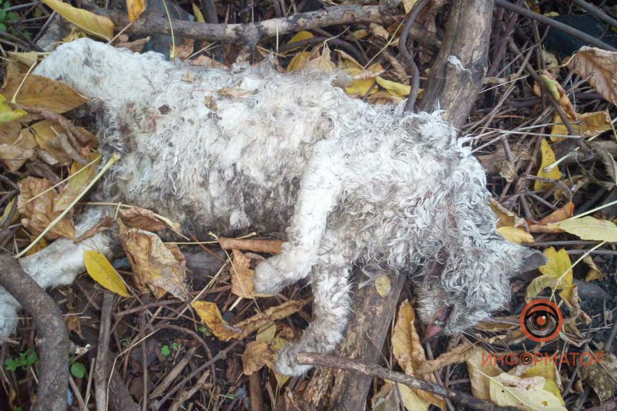 В Днепре живодеры отравили больше двадцати собак: животные умирали в муках