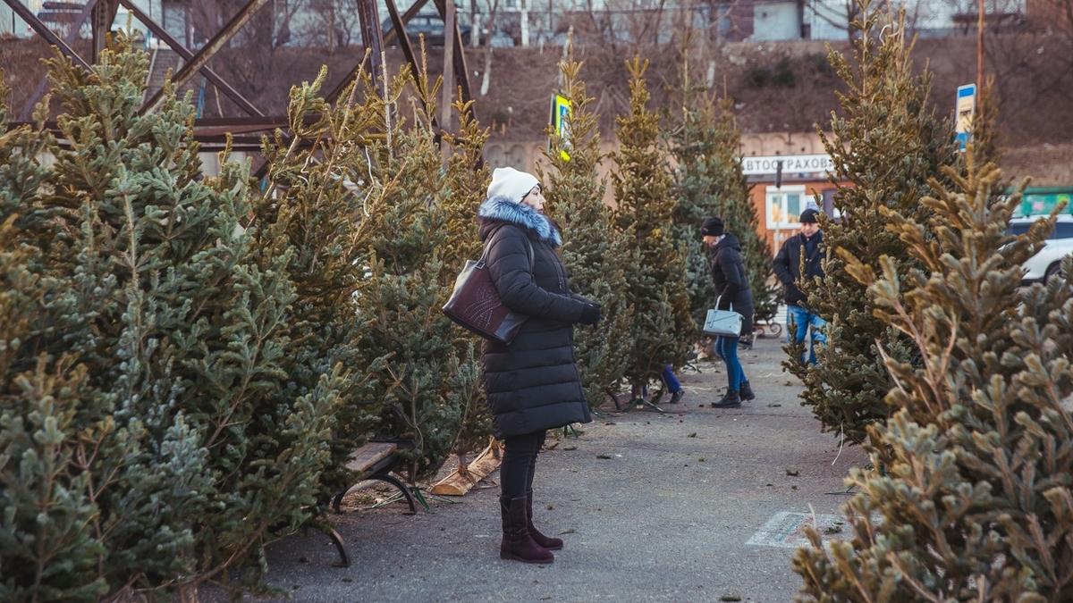 В Днепре продают ёлки по 9 тысяч гривен!