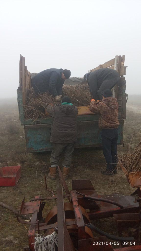 На месте лесного пожара в Павлограде высаживают новые деревья