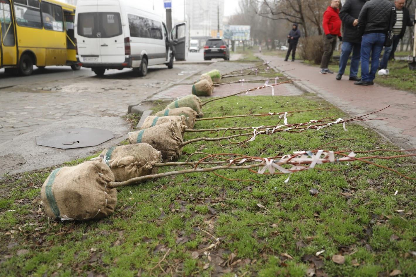 На жилмассивах Победа и Тополь перевозчики высадили молодые деревья