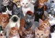 Реабилитационный центр для котов ищет специалистов