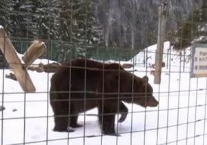 Медведица из зоопарка Днепра уже под присмотром ветеринара в реабилитационном центре