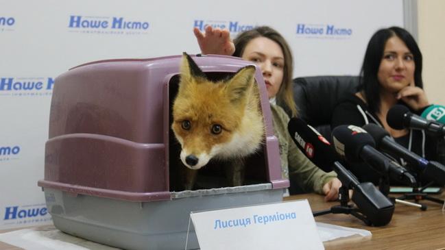 Днепр выходит на Всеукраинскую антимеховую акцию