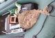 На Днепропетровщине задержали браконьера, выловившего больше 10 кг раков