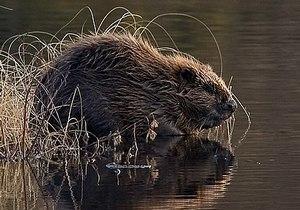 Диковинка региона: под Днепром появились необычные звери-грызуны