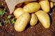 Украинцев ждет рекордно раннее начало сезона молодой картошки