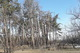 В Днепре на ж/м Северный умирает лес