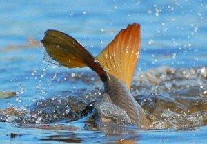 С 1 апреля будет проводится операция «Нерест», которая направлена на борьбу с незаконным выловом рыбы