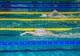 Пловцы Днепропетровщины завоевали семь золотых медалей на чемпионате Украины