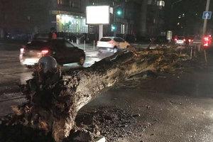 По Днепропетровщине прокатился ураган: за сутки десятки поваленных деревьев