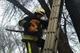 У Дніпрі рятувальники зняли пухнастого з дерева